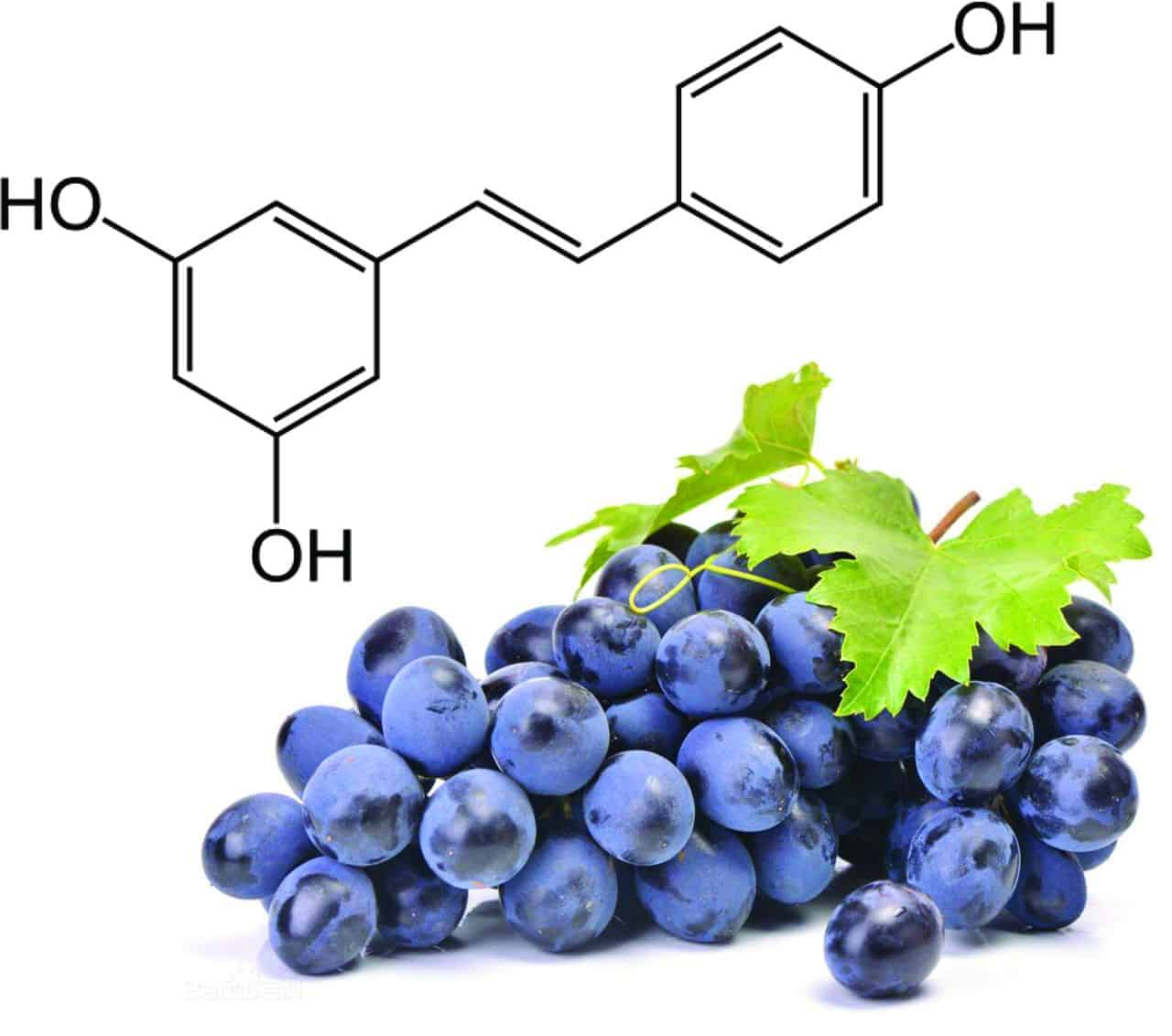 8 Benefits of Resveratrol – Our Favorite Antioxidant!
